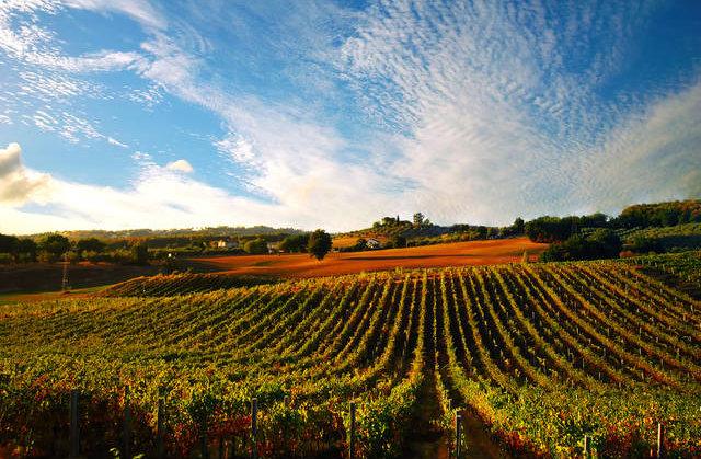 vineyards in Sabina