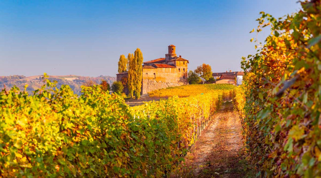 Autumn in the vineyards of Italy