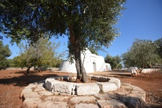 Trulli for sale in OSTUNI (BR)