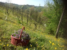 Farm for sale in BRISIGHELLA (RA)