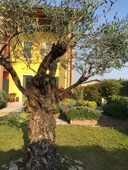 Semi-detached house for sale in BUTTAPIETRA (VR)